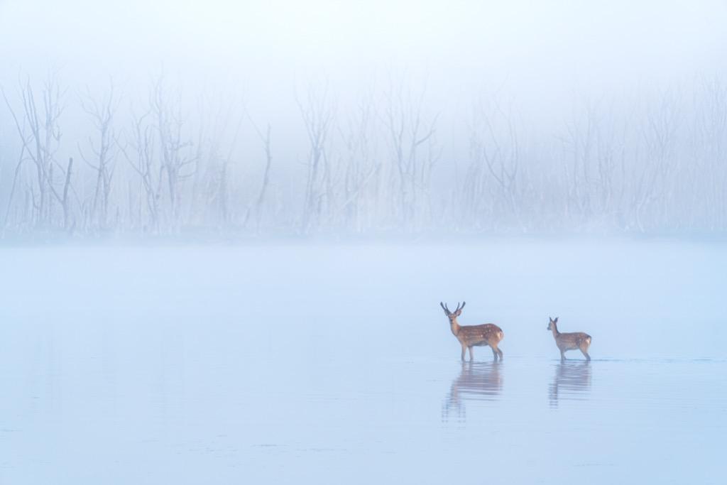幻霧に包まれて|masashi.oyanagi